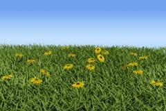 Gras en bloemen Royalty-vrije Stock Afbeeldingen