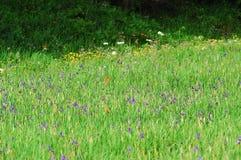 Gras en bloemen Royalty-vrije Stock Afbeelding
