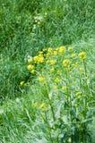 Gras en bloemen royalty-vrije stock foto's