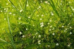Gras en bloementapijt Royalty-vrije Stock Afbeelding