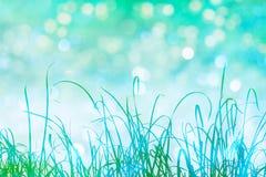Gras en bokeh Royalty-vrije Stock Afbeeldingen