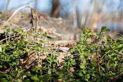 Gras en bomen Stock Foto's
