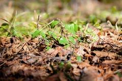 Gras en bomenclose-up Royalty-vrije Stock Foto's
