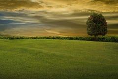 Gras en boom op avondhemel Stock Foto