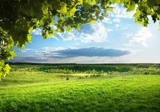 Gras en bos Stock Fotografie