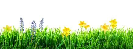 Gras en de lentebloemenachtergrond royalty-vrije stock fotografie