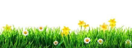 Gras en de lentebloemenachtergrond royalty-vrije stock foto