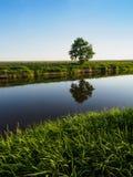 Gras en Eenzame Boom bij Kleine Rivier Royalty-vrije Stock Afbeelding