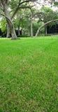 Gras en eiken bomen Royalty-vrije Stock Fotografie