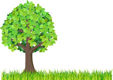 Gras en groene boom die op witte achtergrond wordt geïsoleerdv Royalty-vrije Stock Foto