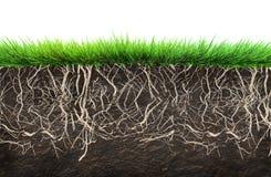 Gras en grond royalty-vrije illustratie