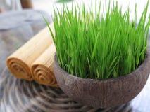 Gras en handdoek in kuuroord Stock Afbeelding