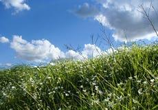 Gras en hemel Royalty-vrije Stock Afbeeldingen