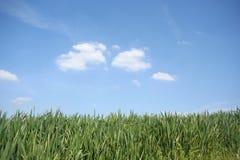 Gras en hemel Stock Afbeelding