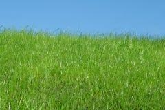 Gras en hemel Stock Fotografie