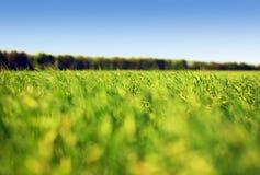 Gras en hemel Royalty-vrije Stock Fotografie