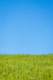 Gras en hemel royalty-vrije stock afbeelding