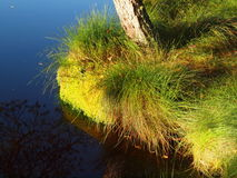 Gras en mos op oever van het meer Royalty-vrije Stock Afbeeldingen