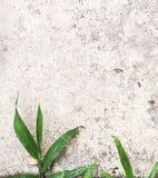 Gras en muur als achtergrond Stock Afbeelding