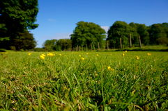 Gras en omheining stock fotografie