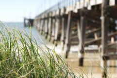 Gras en oude houten pier Royalty-vrije Stock Foto's