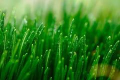 Gras en Regen Royalty-vrije Stock Afbeelding