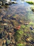 Gras en rotsen onder water Stock Afbeeldingen
