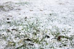 Gras en sneeuw Royalty-vrije Stock Foto's