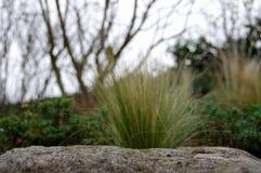 Gras en Steen Royalty-vrije Stock Fotografie