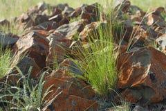 Gras en stenen Stock Foto