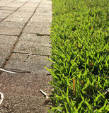 Gras en voetpad royalty-vrije stock afbeeldingen