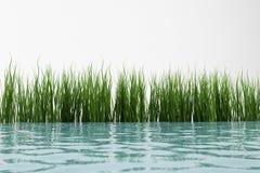 Gras en water Stock Illustratie