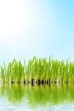 Gras en water Royalty-vrije Stock Afbeelding