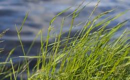 Gras en water Royalty-vrije Stock Fotografie