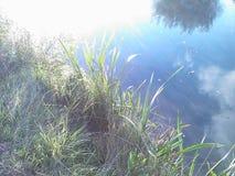 Gras en water Stock Fotografie