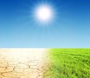 gras en woestijn Stock Afbeeldingen