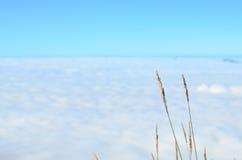 Gras en wolken Stock Afbeeldingen
