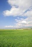 Gras en zon stock fotografie