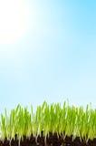 Gras en zon Stock Foto's