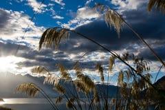 Gras en zon Stock Foto
