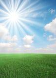Gras en zon royalty-vrije stock afbeelding