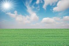Gras en zon stock afbeeldingen