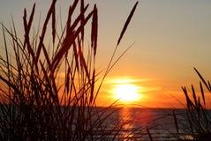 Gras en zonsondergang Royalty-vrije Stock Foto's