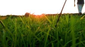 Gras en zonsondergang Stock Foto