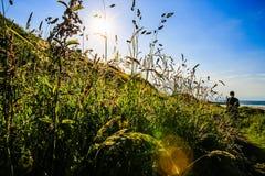 Gras in England Stockfoto