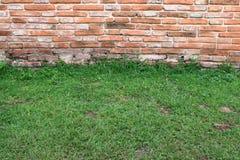 Gras entlang der Wand. Lizenzfreie Stockbilder