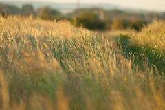 Gras. Evening sun shines on nature Stock Image