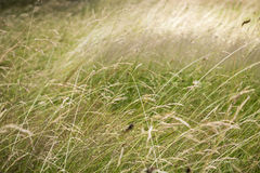 Gras für Hintergründe Lizenzfreie Stockfotos