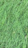 Gras-Feld Lizenzfreie Stockfotos