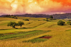 Gras-Feld-Sonnenuntergang-Landschaft Lizenzfreie Stockfotos